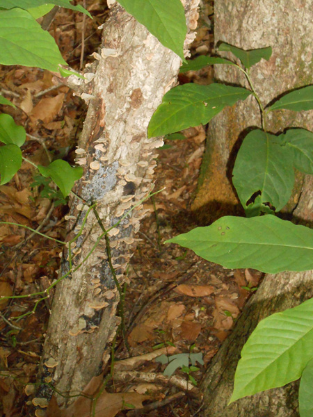 fungus frills growing blog