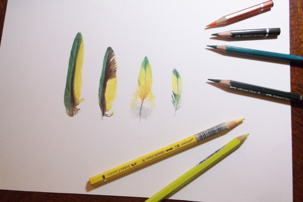 feathers and pencils