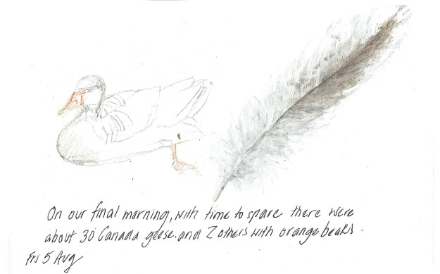 5aug2016-goose-and-feather