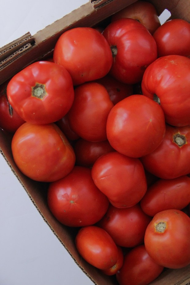Bulk Tomatoes for Canning