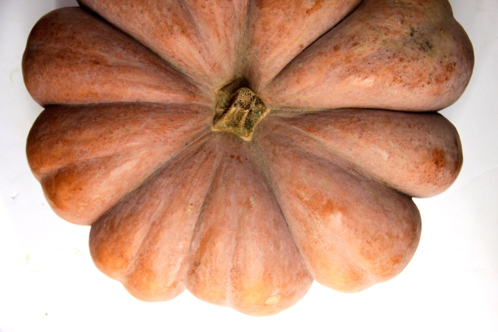 Learn how to roast up a giant pumpkin and create delicious, flavorful and budget-friendly pumpkin puree!