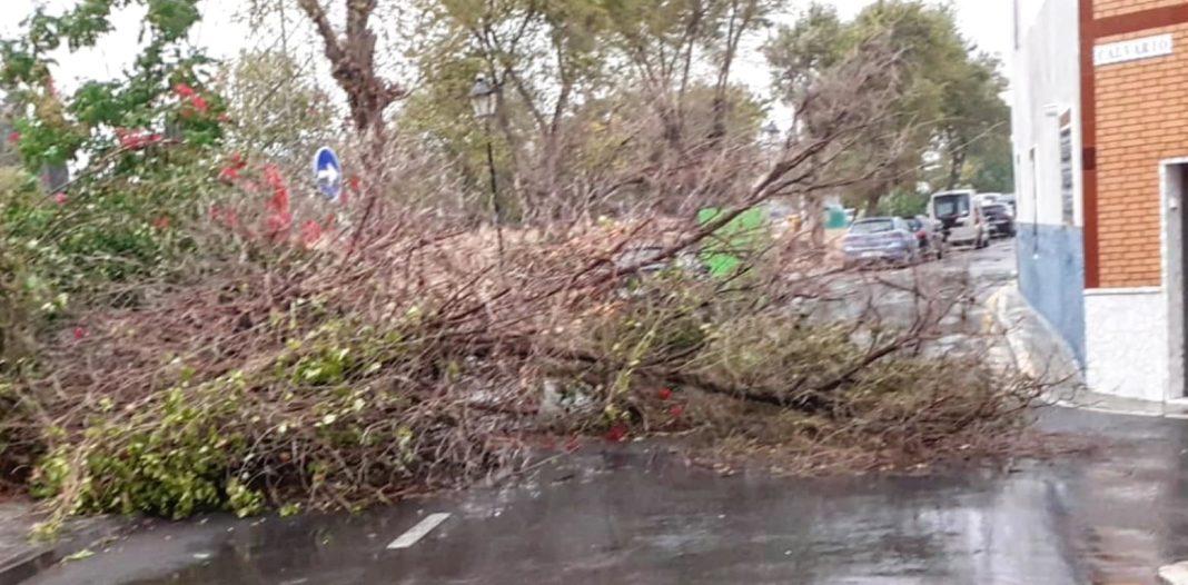 Árbol abatido por el viento en Camas. Foto del Ayuntamiento.