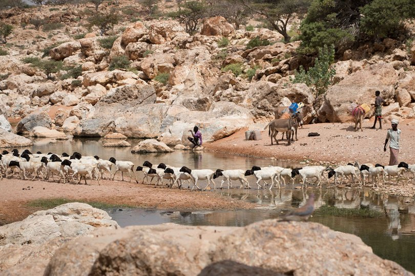 Thousandsdisplaced as drought strikes Puntland