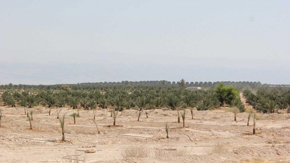Jordan Valley [Arwa Ibrahim/Al Jazeera]
