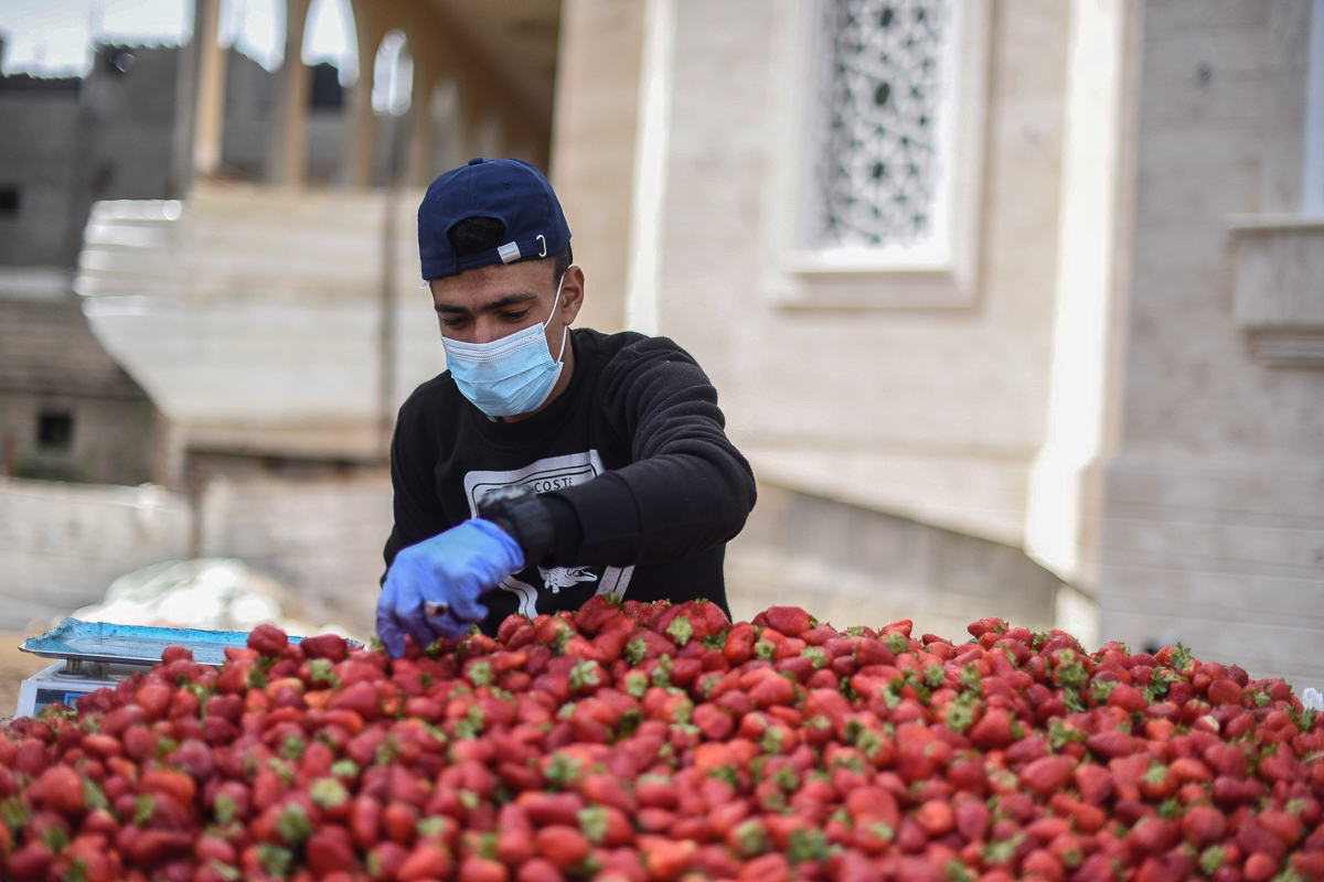 """Mohammed Al-Masri, 23, sells strawberries at his stall in Khan Younis. Few street hawkers take the precautions he does. """"Ultimately, I have a family to take care of,"""" he says. [Abed Zagout/ICRC]"""