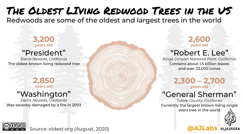 انٹرایکٹو: گرینریڈ - سرخ لکڑی کے درخت