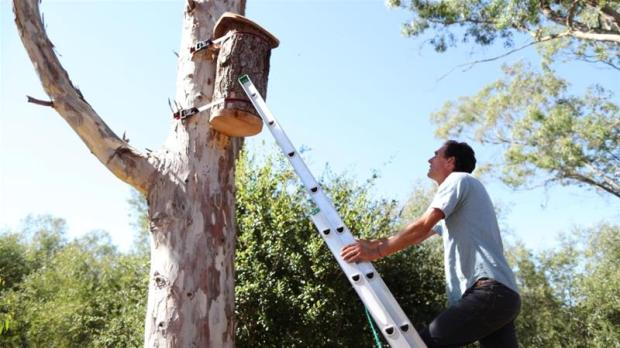 Image result for To protect endangered bees, a person from California, California, USA is using natural methods