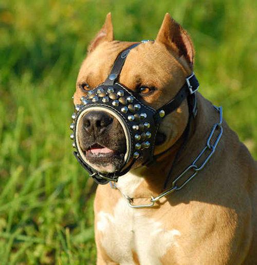 Pitbull leather dog muzzle studded best muzzle among muzzles big Dog Muzzles For Pitbulls