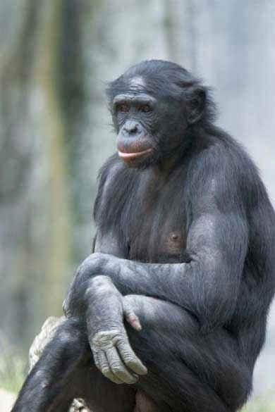 Skymane+bonobo