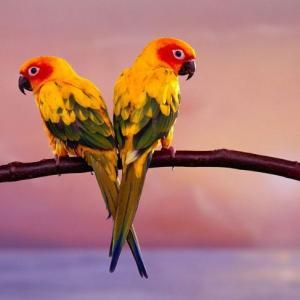 Психологический тест Какой попугай тебе подходит больше ...