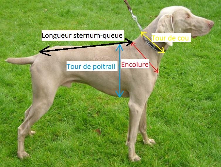 Comment prendre les mesures du chien