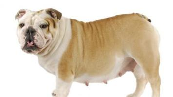 How Long Is a Dog's Pregnancy