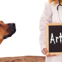 How To Help An Arthritic Dog