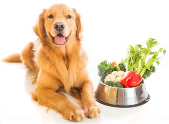 Vegetarian Diets And Dogs