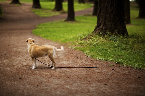 What To Do If You Lose Your Dog