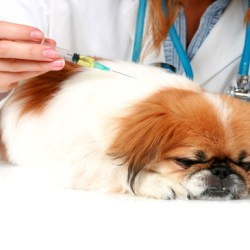 All About Diabetes in Dogs