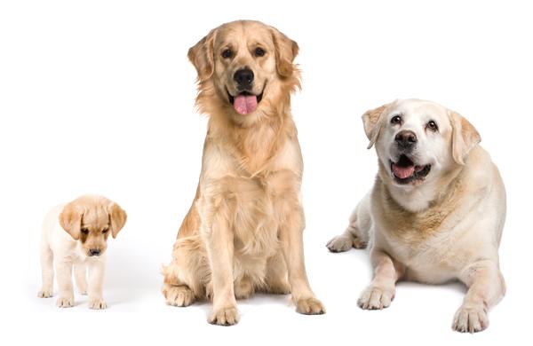 Dog Life Stage