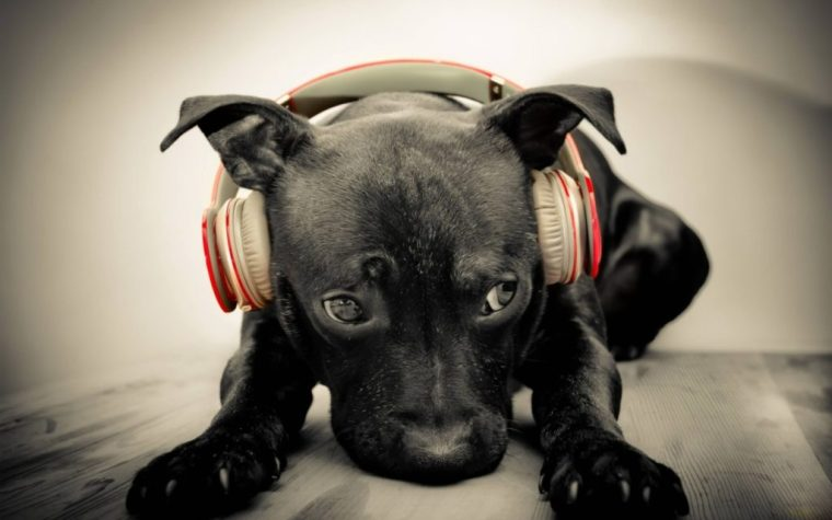 animal-music-for-dogs-1440x900