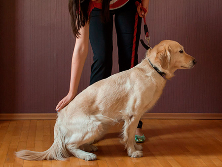 teach your dog to sit 4