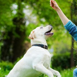Hand Signals To Teach Your Dog