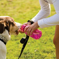 What to do if your puppy is suffering heat stroke
