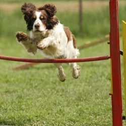 Agility, a way to educate your dog