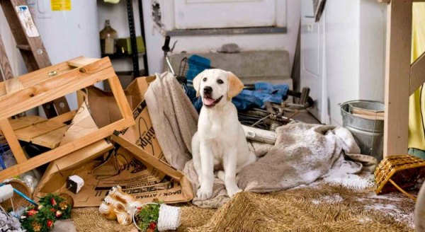Educating a destructive dog