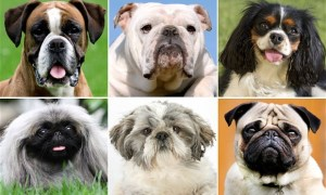 quiz dog breeds