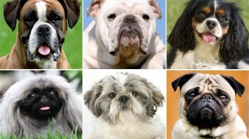 quiz dog breeds