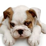 Negative punishment for dogs