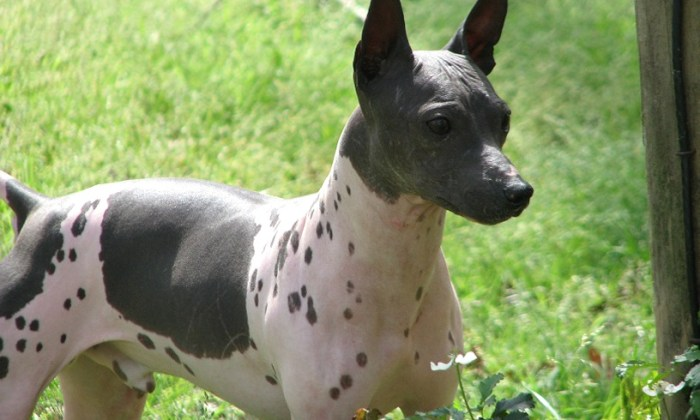 TOP TEN UGLIEST DOGS