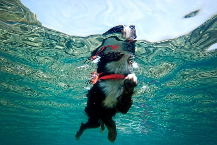 blurmediaphotography.com_swimming-dog
