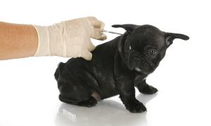 Diabetic dogs symptoms