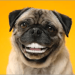 False teeth for dogs