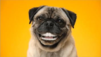 False teeth for dogs
