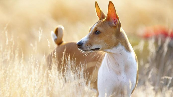 Image Result For Best Dogs For Allergies