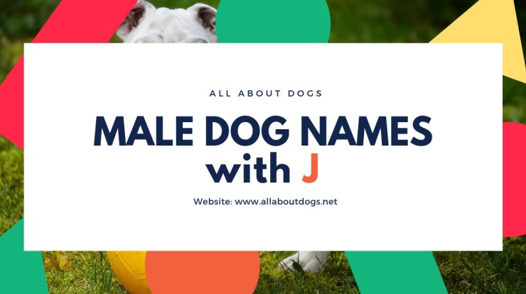 Male Dog Names With J