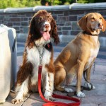 General Travel Tips For Dog Owners