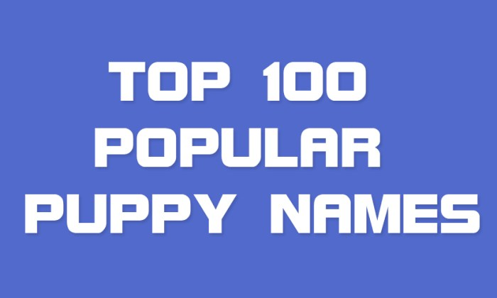 Top 100 Popular Puppy Names