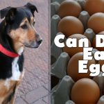Can Dogs Eat Eggs