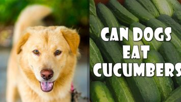 Can Dogs Eat Cucumbers