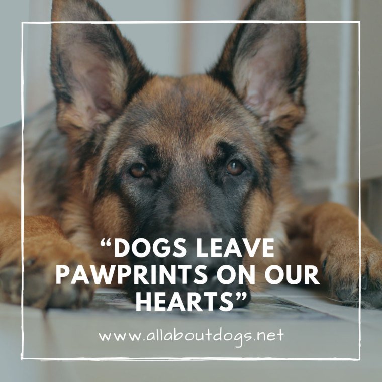 Dog Quotes 3