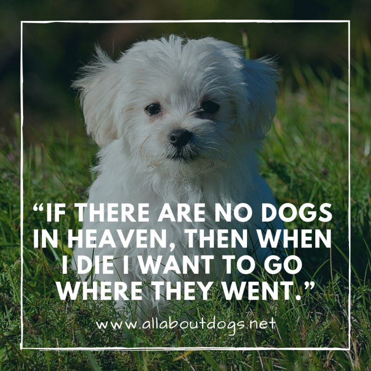 Dog Quotes 5