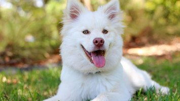 The Health Benefits Of Regular Dog Grooming