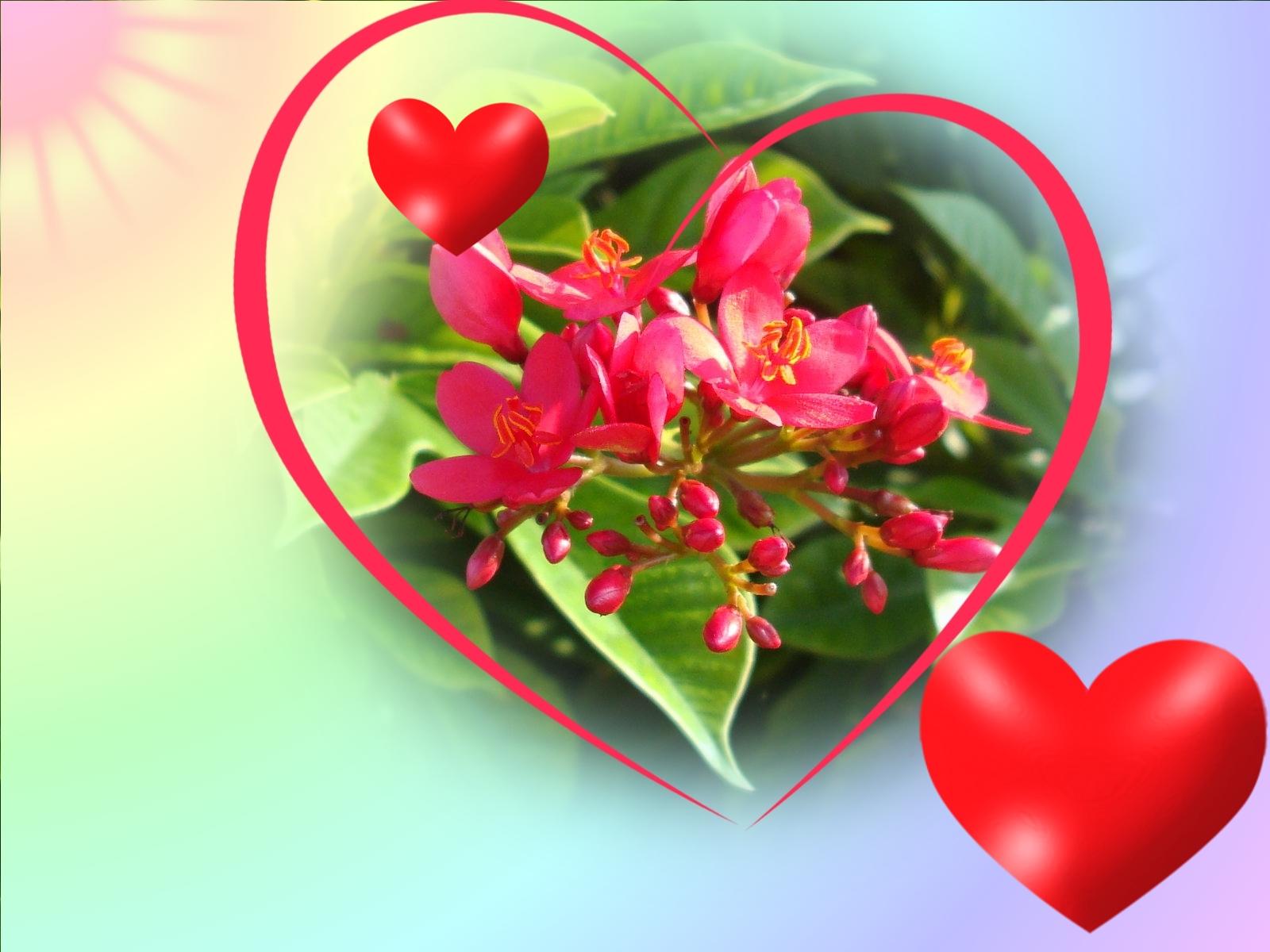 Fonds Dcran St Valentin Amour Coeurs Anges Et Fleurs