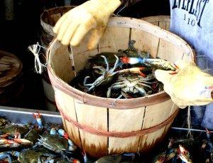 Crab basket