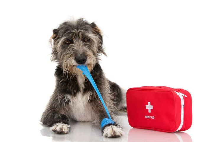 Dog with bandage and first aid kit