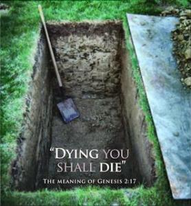 a freshly dug grave