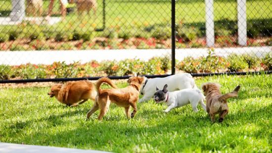 Community Dog Parks