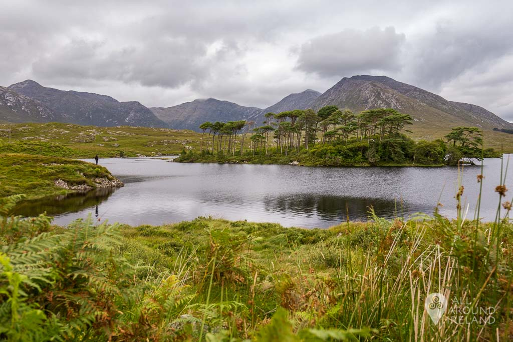 Wide angle of Pine Island, Derryclare Lough